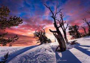 Bristlecone Sky Steve Patchin