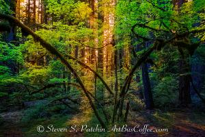 Colored Forest Steve Patchin