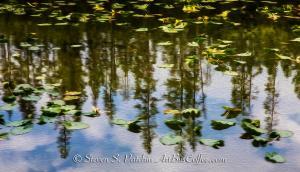 Horse Lake Steve Patchin
