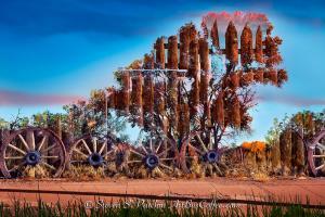 Wagon Wheel Tree Steve Patchin